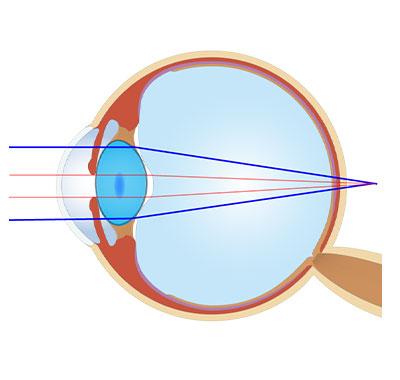 目の調整機能